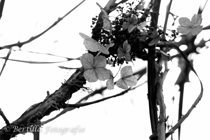 landschapsfotografie-62