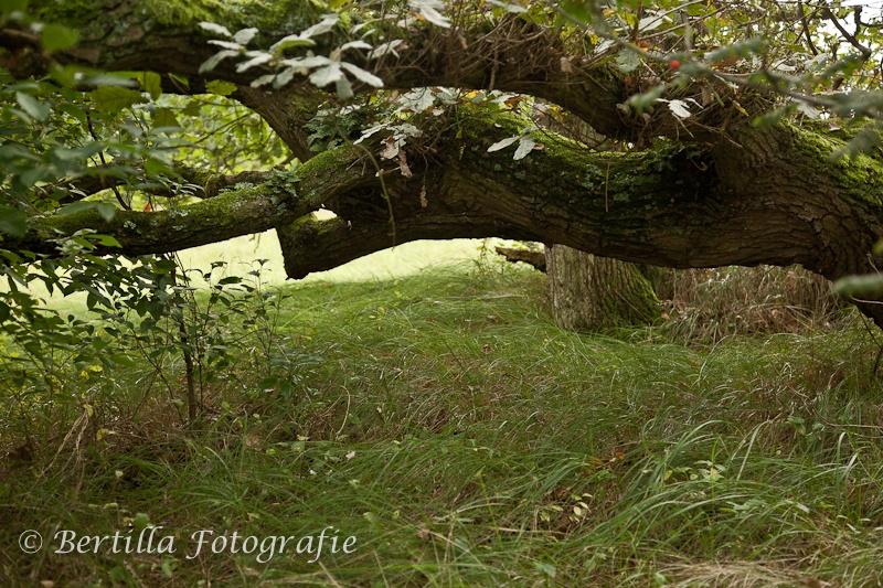 landschapsfotografie-76